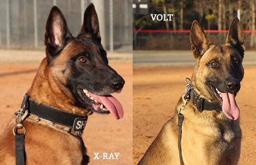 The Cherokee Sheriff's Office K9 Unit purchased two new K9s, Volt and X-Ray